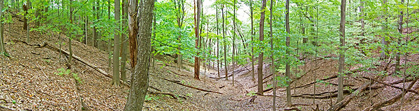 Wooded gully at Irondequoit Bay Park West