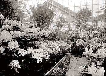 Black & white photo of flowers in the Lamberton Conservatory